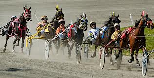 Harness racing 2