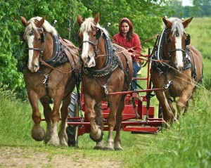 Horses-in-harness-1024x819